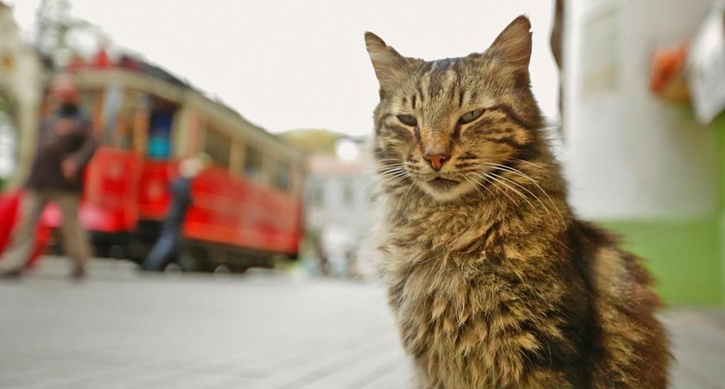Sekretne życie kotów będziecie mogli poznać już od 28 lipca